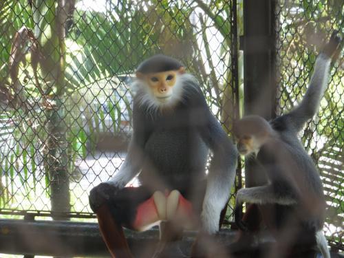 物凄い運動神経の猿。