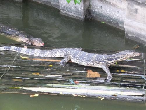 動物園の池のトカゲ。<br /><br />2匹でコミュニケーションを取っていました。<br />私は爬虫類がコミュニケーションを取るのを初めてみましたよ。<br /><br />ちなみにタイでは、トカゲやヤモリを怖がる人は女性を含めていません。<br /><br />私も全く怖くありませんが・・・