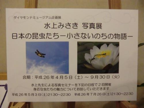 今回の企画展は「水上みさき 写真展」である。日本の昆虫たちー小さないのちの物語ー