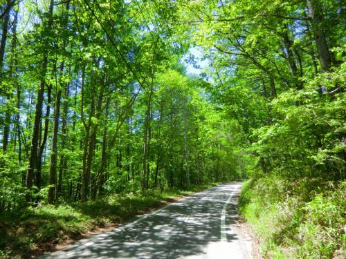 別荘地帯を抜けると本格的な林道になる。新緑の美しい森の中、木漏れ日を受けながらひたすら登る。少し傾斜が緩くなると自転車にまたがりペダルをこぐ。