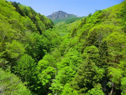 東沢の新緑が素晴らしい。まさに季節は春、「目に青葉、山ほととぎす、初ガツオ」である。この俳句は今から300年ほど前の人、享保年間(1716年没)の山口素堂という人の作だそうだ。
