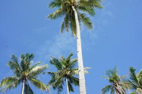 青い空とヤシの木。<br />うーん。南の島。<br />