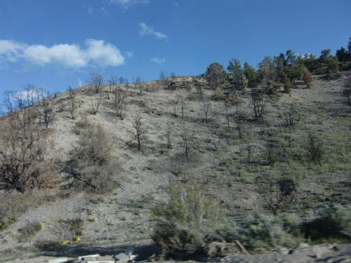 数年前に山火事があったそうで、途中の山並みには、その時燃えた木が残っていました。