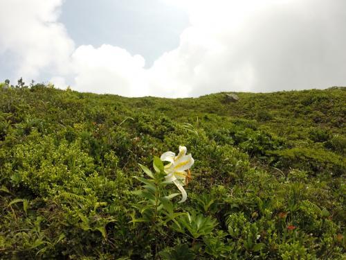 ユリが咲く中を歩いていきます。香りがすごい!花をじっくりみると蟻もすごい!