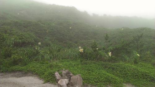 お昼ごはんタイム。<br />霧がどんどんでてきて、ユリがぼわーーんと浮かびあがり、幻想的