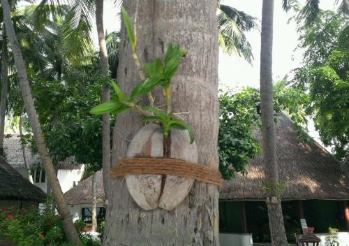 椰子の実の一輪挿し。