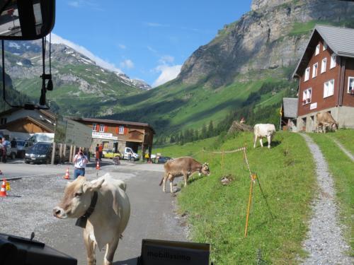 バスは、ウルナーボーデンでしばし停車。<br />ポストバスなので、運転手さん、手紙をポストに持っていくのです。<br /><br />そうしているうちに、一頭の牛さんがバスの前に。<br />運転手さんが乗り込んでも、牛さんがどいてくれないので、運転手さんは降りて牛をどかしました。<br />クラクションでブッブ====!!<br />なんてことはせずに、笑顔で牛を優しくどかす運転手さんに、こちらも思わず笑顔になっちゃいます。<br /><br />いいよなあ・・・こういうのって。
