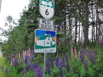 6号線はルーピンの花ざかり<br /><br />その後6号線を走ってCavendish(アボンリー村)へ入り、宿に荷物を置いて散歩と夕食に出ました。ちなみに6号線はBlue Heron Scenic Driveと名付けられた、風光明媚な道路です。