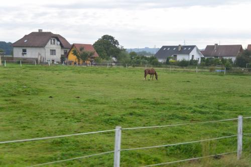 途中、馬がのんびり草を食む牧場など、<br />とにかくどこまでも続く草原が広がっていました。