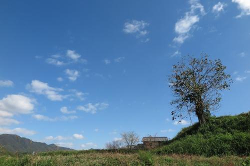 よくわからずに走りながら、ふと見つけた秋らしい景色。<br /><br />柿と民家と青い空がきれいでした。<br /><br />これでも、神戸市内。<br />
