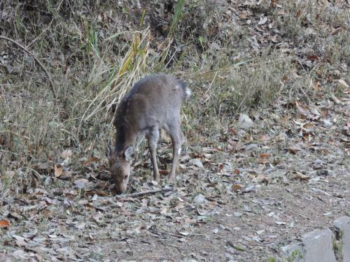 まだ小鹿のようだったが、私たちが近寄っても逃げなかった。