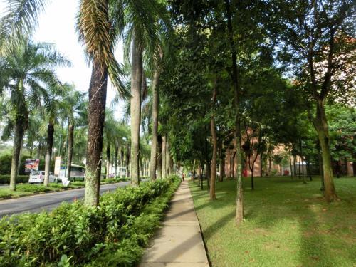 道路に沿って背の高いヤシの木が植えられ、いかにも南国らしい雰囲気がする。ホテル前の遊歩道(写真)を歩く。グリーンの芝生が美しい。