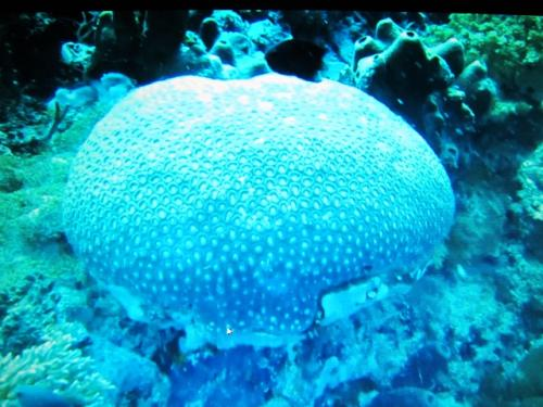 珊瑚の一種だろうか、とても美しい!珊瑚の種類も沢山!