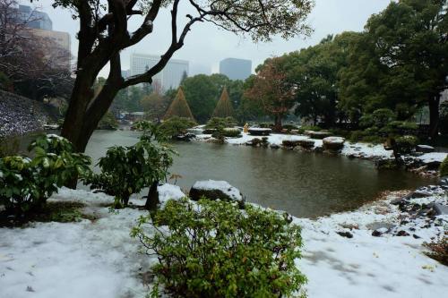電車に乗り 東京駅で乗り換える頃は<br /><br /> 雪の姿はない 小雨 降ってる<br /><br />  折角来たのだから 日比谷公園へ来てみれば、<br /><br />    まだ雪は消えていない。<br /><br />小雨は、。降ってます。<br /><br />  消えない内に。。ひとまわり。