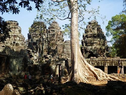 遺跡の中の巨大な木