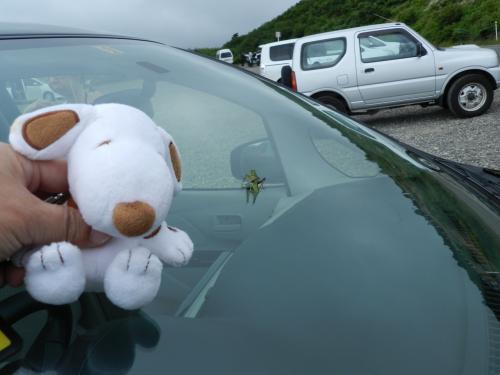 山形県上山市から蔵王山を目指して走ります。<br />県境を過ぎて「駒草平」の駐車場に車を停めました。<br /><br />マーブルス君:「車のフロントガラスに何かとまっているよ〜!」<br />よく見ると、バッタが一匹とまっていました。