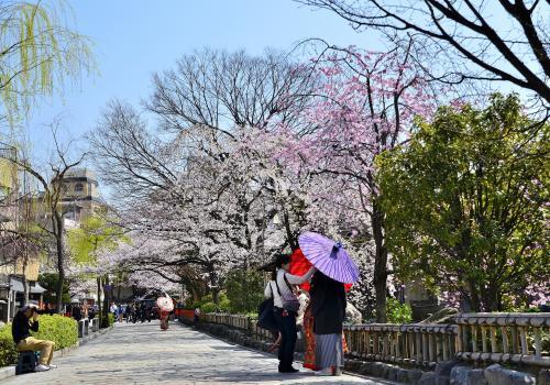 祇園白川<br />道を挟んで左に柳、右に桜が立ち並んでいます。<br />結婚写真の前撮りでしょうか、数組のカップルがカラフルな蛇の目傘を差して写真に納まっていました。<br />