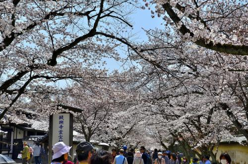 醍醐寺 <br />桜のトンネルとして有名な三宝院入口から南北に走る参道を霊宝館へと向かいます。<br />意外にも霊宝館へは待つことなしにすんなりと入ることができました。<br />12時過ぎですので、ツアー客は食事の真っ最中ということなのでしょうか?<br />そういえば、敷地内も割とすいていたような…。<br />とにかくラッキーの一言です。