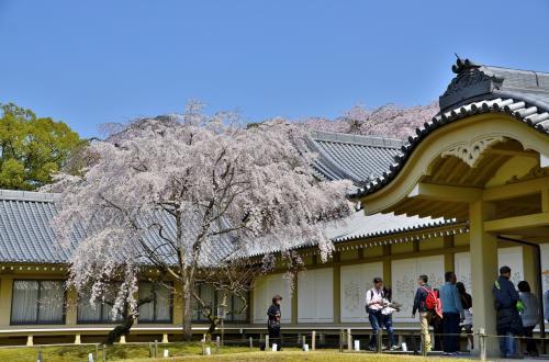 醍醐寺 霊宝館<br />霊宝館は、1935年に開館 した寺宝の保存と公開を目的とした施設です。つまり、耐火構造の宝物庫です。その後も1979年に新収蔵庫3棟、2001年には新館の裏に平成館が開館しています。41点が国宝に、 6万点以上が重要文化財に指定され、醍醐寺が日本最大級の文化財保有数を誇ることになったことも霊宝館の新築への拍車をかけたようです。<br />外観は白亜の殿堂となっており、どことなく城郭を彷彿とさせる意匠です。霊宝館で仏像などを拝観すると博物館で展示物を鑑賞している感じで物足りなさもありますが、千年の歴史を持つ醍醐寺は何度も伽藍堂塔が罹災し、今残る以上に失われた寺宝が数多くあります。それを思えば、後世に遺すためにこうした宝物庫に寺宝を保管することは理にかなっているのかもしれません。
