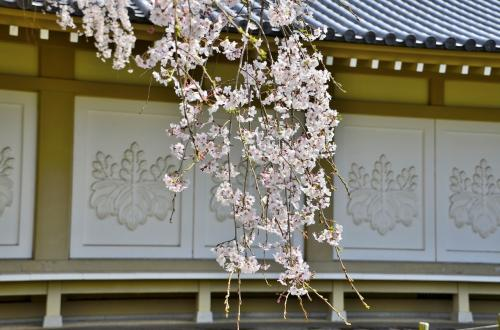 醍醐寺 霊宝館<br />新館の美しい白壁には、「太閤桐紋」とも称される「五七桐紋」がレリーフで浮き出されています。さすがに唐門のような金ピカは憚られたようです。<br />しかし、これだけ潤沢に桐紋が使えるのも醍醐寺の特権ですね!<br />