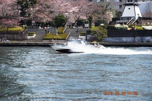 けたたましいサイレンを鳴らして水上警察のボートが赤色灯を回転させながら上流方面へ疾走して行きました。<br /><br />さくらとのコラボ(^^ゞ<br />