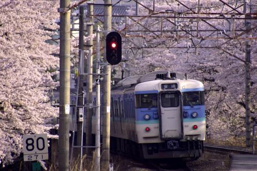 勝沼ぶどう郷駅に下車した瞬間に、目の前に見渡す限りの素敵なピンク色の風景を今年も無事に見ることが出来ました〜
