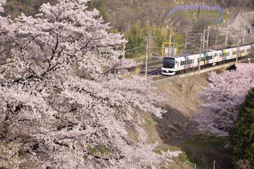 勝沼ぶどう郷駅から10分ほど歩いた場所にある、中央線沿線に咲く桜並木もこれまた見事な美しさなんですよね〜