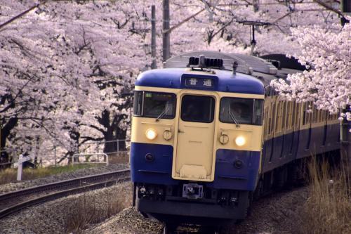 新調したカメラの試し撮りに、満開な桜の中を走る中央線115系スカ色を一枚パチリ☆