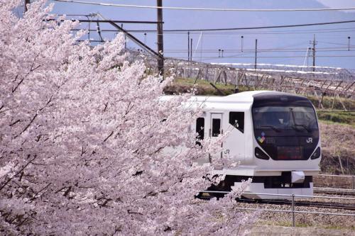 ・・・正直なところ、カメラを失ったときはもう今年の桜は半ば諦めていたところもありましたので、こんなにも素晴らしい風景を目の前に出来ただけでも最高のひとときでありました