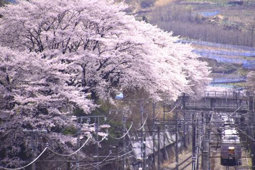 う〜ん、この場所からこんなにも満開な桜の風景を見たのも初めてでありましたので、この風景にちょっと感動した瞬間でありましたねw