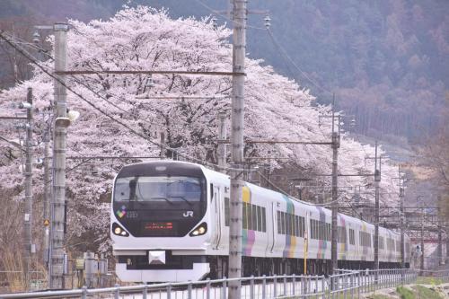 (いや〜、今年の桜になんとか間に合ってよかったあ〜\(^o^)/)