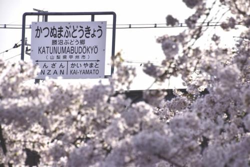 さてさて・・・<br />今年はあまり天候に恵まれていなかったようにも感じつつも、世間では各地で満開の桜を目にする、一年で最も華やかな季節が到来いたしましたが・・・