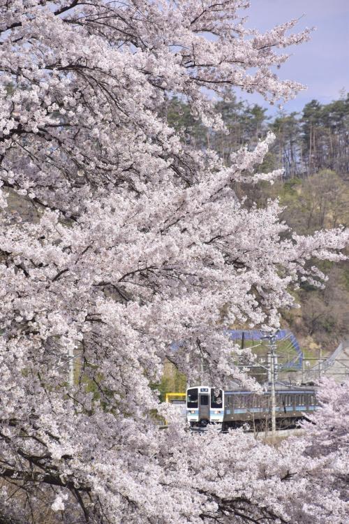 この場所でこんな素敵な桜のトンネルの風景を見ることが出来たのも私自身今年が初めてでありましたねw