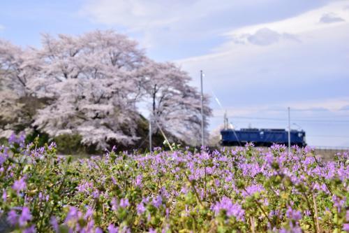 桜並木の近くには勝沼の春の息吹を感じさせる風景がたくさんありましたね!