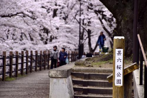 さて、勝沼ぶどう郷駅に咲く桜は駅前にある「甚六桜」が有名ではありますが・・・
