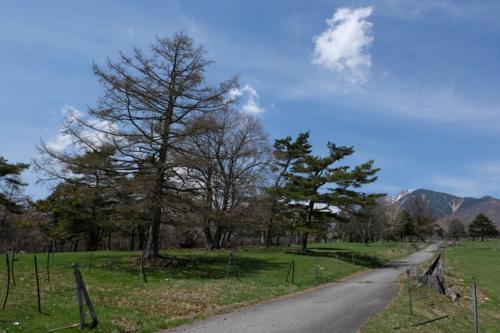 牧場の管理道路を歩きます。<br /><br />あたりは巨木の森。