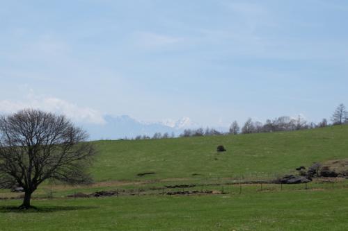 巨木の森を抜けると広大な牧草地が広がります。<br />丘の先には南アルプスが望めます。