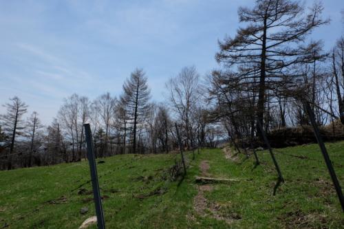 10分ほど悪路を登りきると、樹林帯にはいります。<br />ここでコースは左に曲がり、あとは下りです。