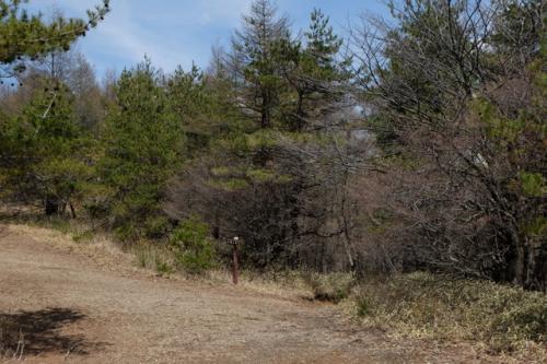 本日は少し戻って、見晴台から八ヶ岳に向かって右手の樹林帯へ。(小さな道標のある所)