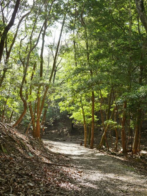 初夏を思わせる陽気でしたが、山道は涼しい。<br /><br />アカマツやコナラの木々。所々日が射し込みきれいでした。