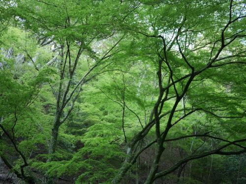 とにかく緑が美しい!!