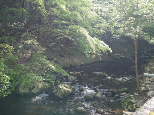 川に出ました。<br />大阪では唯一アマゴがいる川だそうです。<br />他にも生き物多数。<br />箕面ビジターセンター主催の川探索ツアーがあるみたいなので、今度はそれに参加してみようかな。