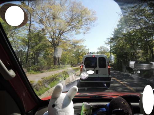 「カングージャンボリー」の会場を目指してしばらく走ると、道路が混雑して来た。見ると、ほとんどの車がカングーである。