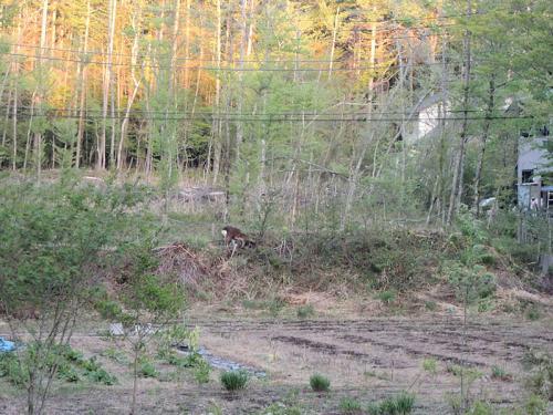 おまけに、林の中に見えるのは、鹿ではないか!