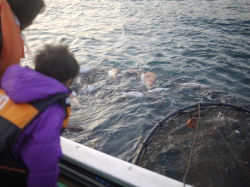 ドキドキの瞬間。網をあげます。<br />わぁ、お魚いっぱい!!<br />なんと、鯛にヒラメにスズキにハマチ…。<br />それはそれはたくさんあがりました。<br />鯛は30匹ほど。<br />今年初めての大漁とのこと。なんてラッキーなんでしょう!!