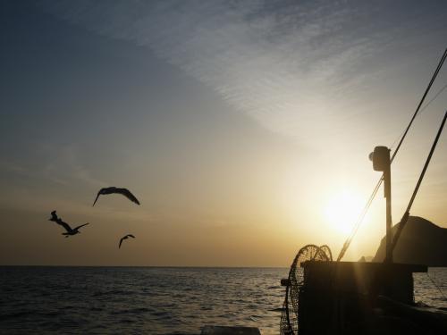 魚に夢中になっていましたが、朝日もきれいにあがりはじめています。