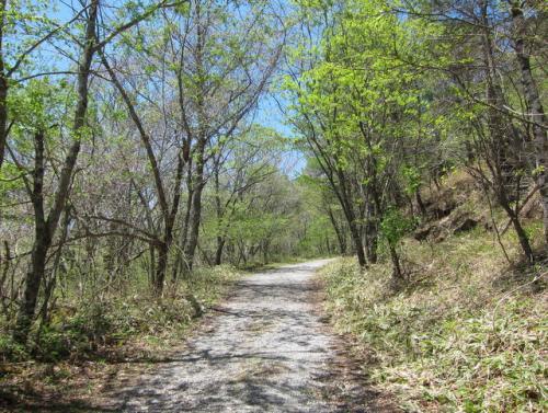 新緑に囲まれた、静かな林道を歩きます。