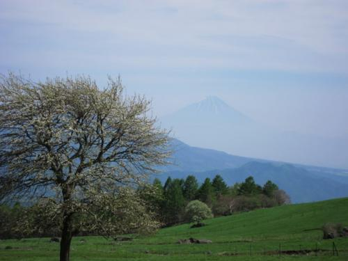 うっすらと富士山も望めます。