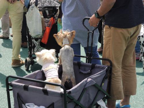 飼い主と一緒の犬たち。