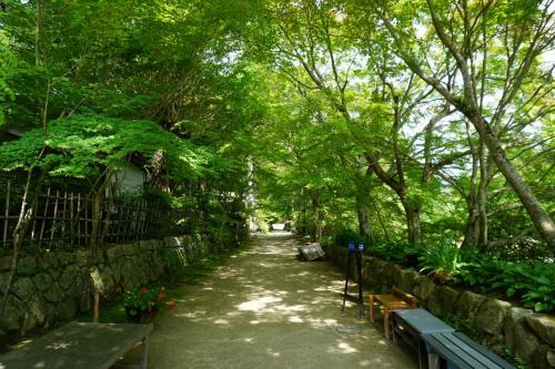 山門から緑の濃い参道を奥に進んで行きますと。。